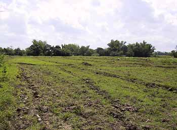 land for Brothers' Noviciate near Iloilo